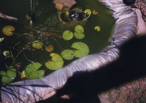 spring 1996 photo: water lilies