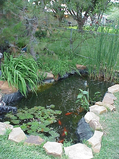 Burkhart pond and fish, 2000